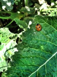 bicho-bug